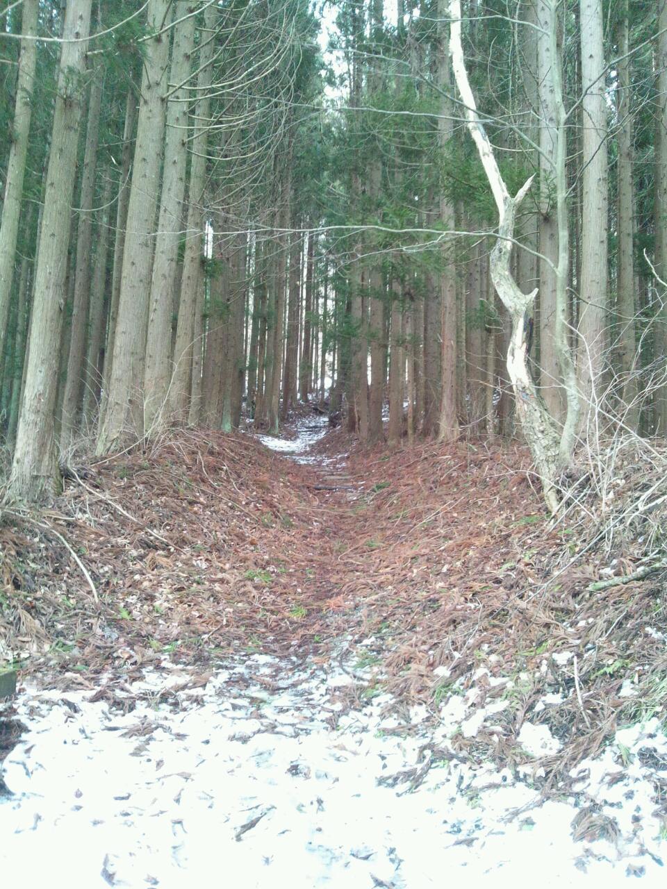 続石への道は、けっこう山道。(入口に杖もあります…)