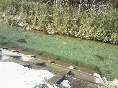 春はエメラルドグリーンになる、家のそばの川