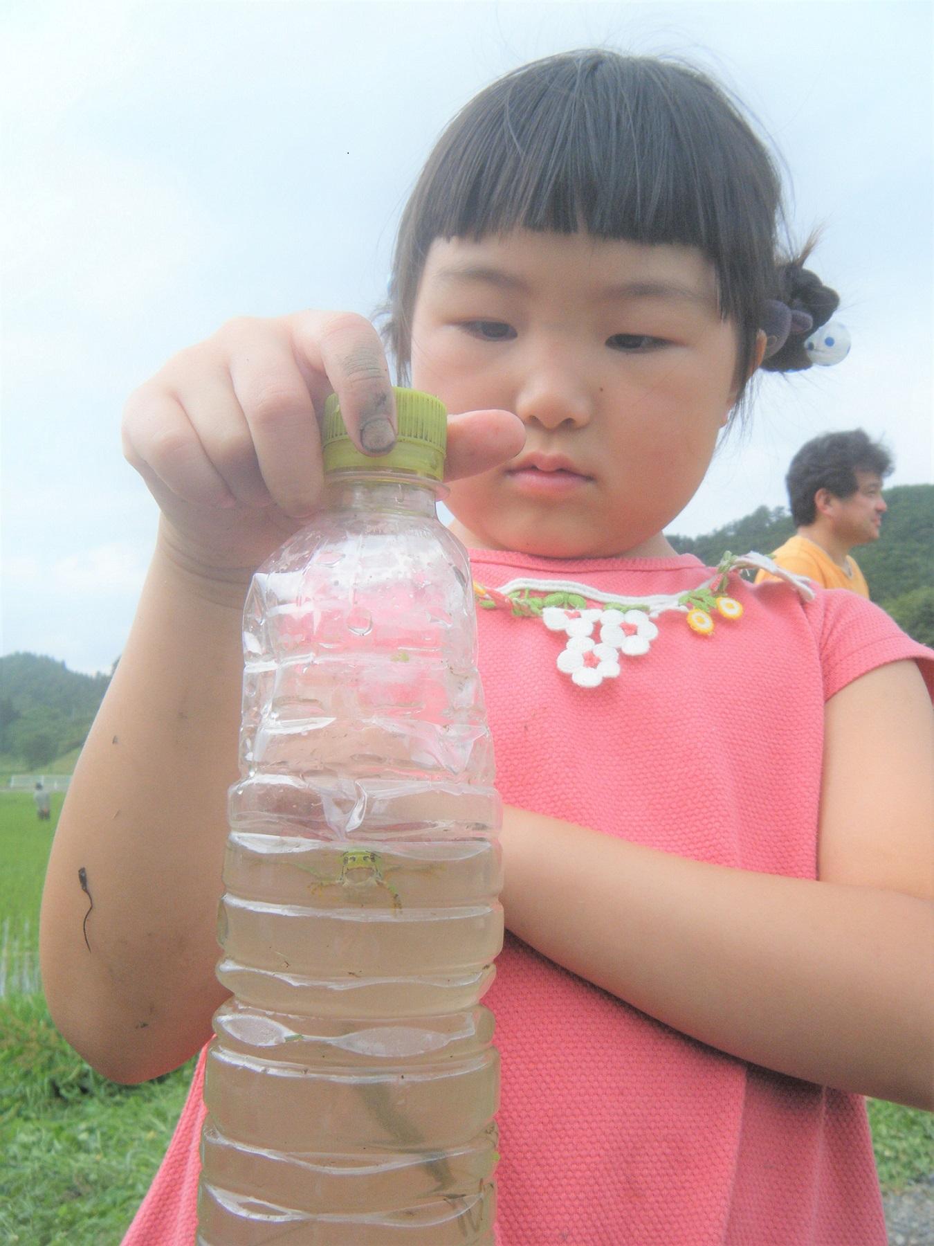 カエルと一緒に、水かまきりも。