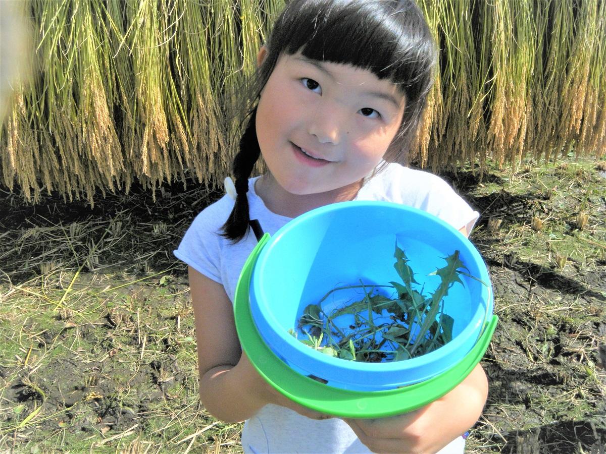「イナゴハウス(虫かごにイナゴを入れて、周りを草で覆う)」を作っていた女子たちも。