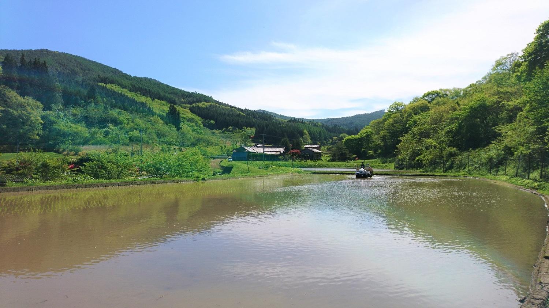 昨年からお借りしている、山の中の田んぼ。美しい場所。