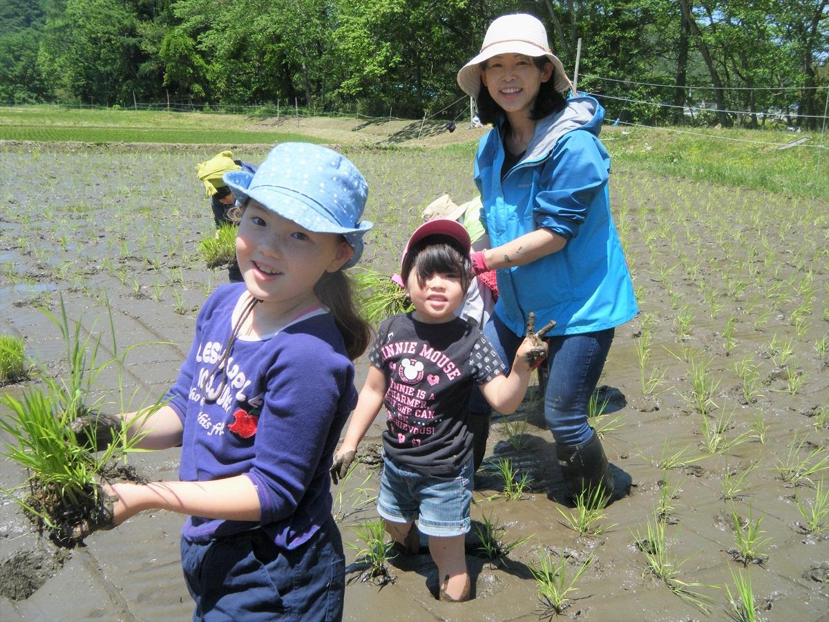 昨年田んぼに入れなかったお子さんが、ずんずん泥の中を進む。変化におどろき。
