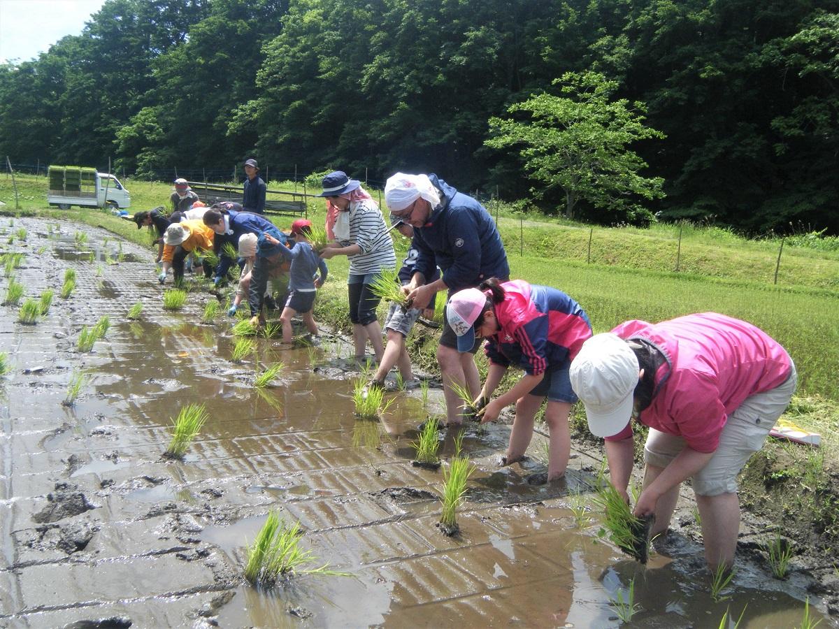 果てしない広さ…と感じたけれど。どんどんどんどん植えられていく稲たち。人の手があるってすごい。