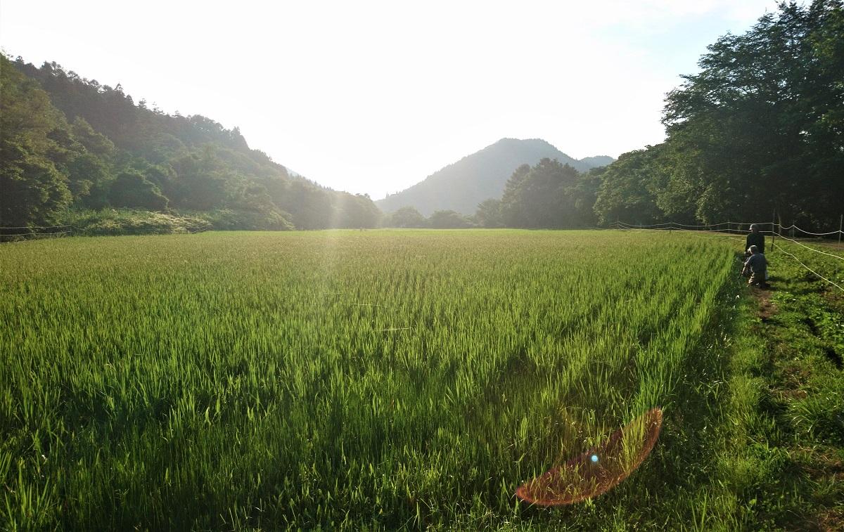 遠野4号の田んぼ。車の音が聞こえない、桃源郷のような場所。