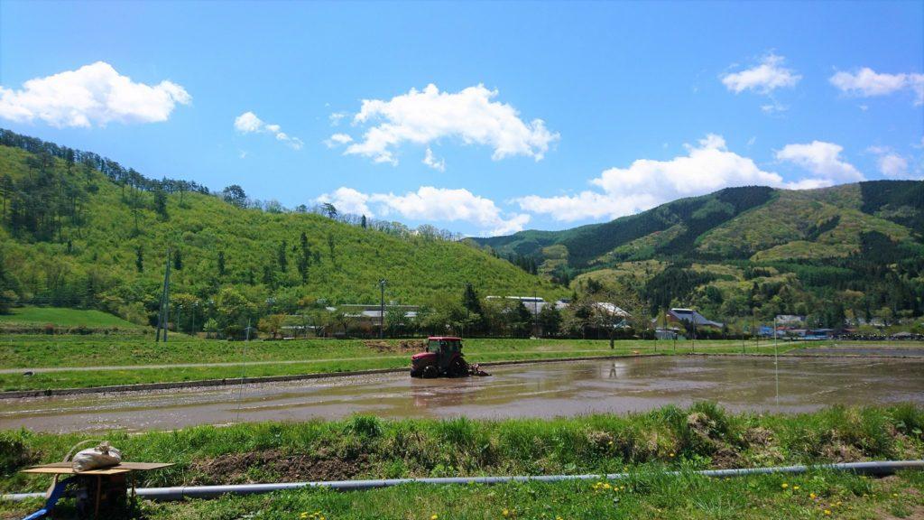 代かき②。山の緑がどんどん変化して、きれいなんだなぁ。