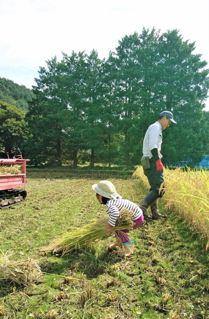 優しいタカさん、稲に夢中の娘。