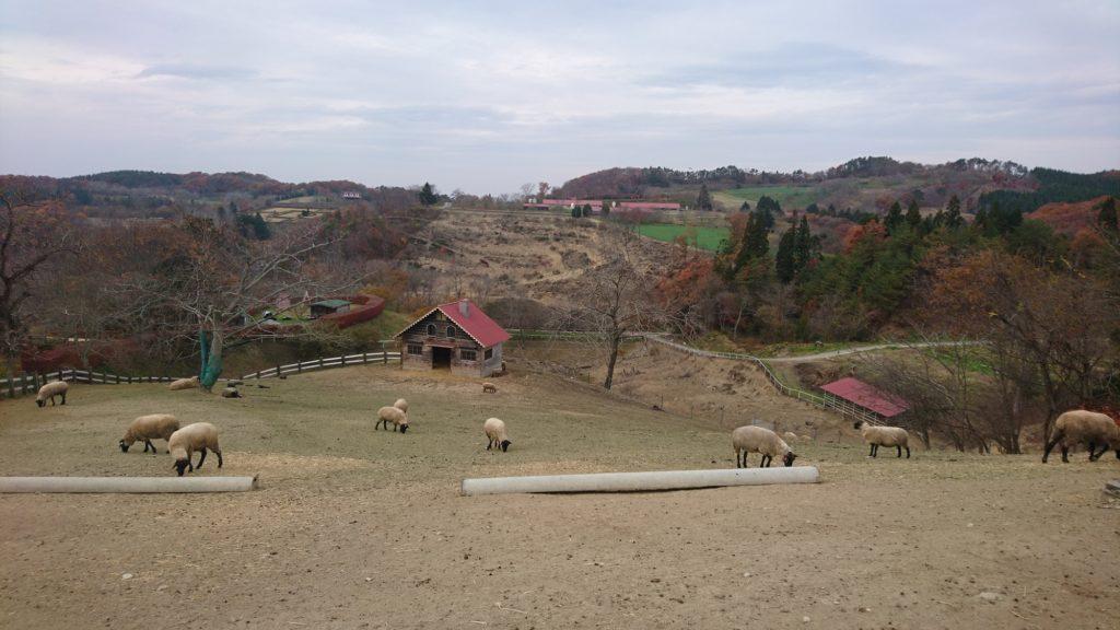 2020年11月 アーク牧場の羊たち。