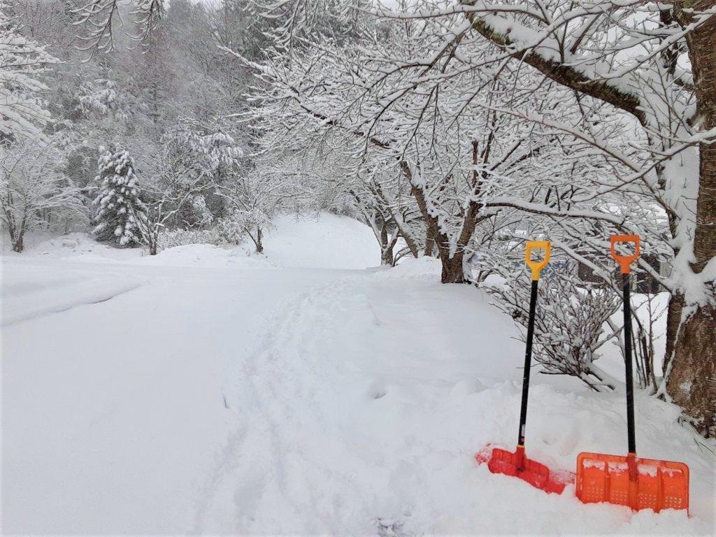 春は桜できれいな家の裏の坂。スキーできそうな雪。