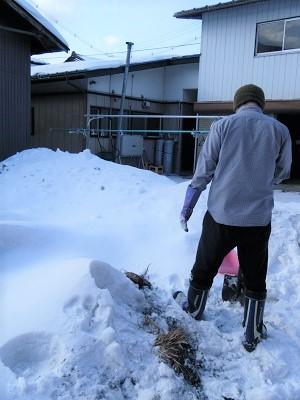 それぞれのお家の畑にある、大根の雪室。
