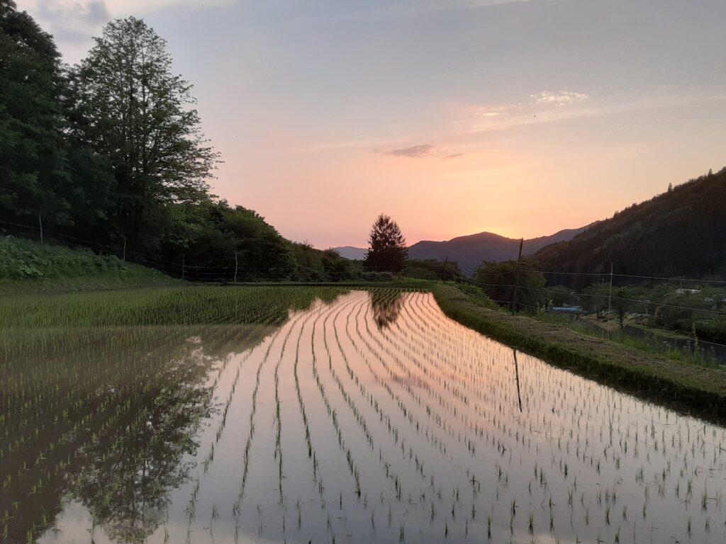 2021年6月7日 田植えが終わって、夕焼けがきれいだったなあ。
